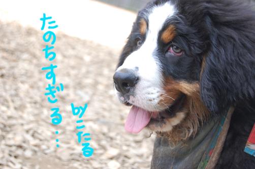 tanochisugiru.jpg