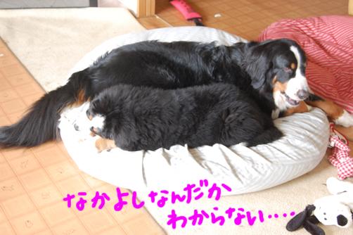 yakayoshinanndkadoudaka.jpg