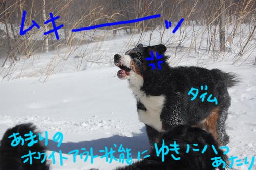yatsuatari.jpg