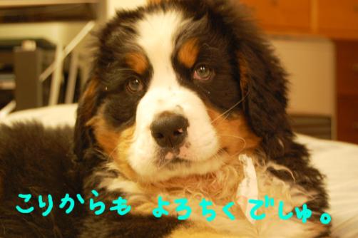 yorochiku.jpg