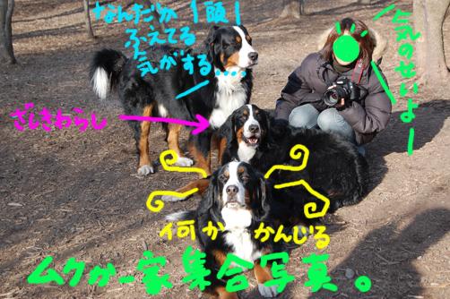 zashikiwarashi.jpg