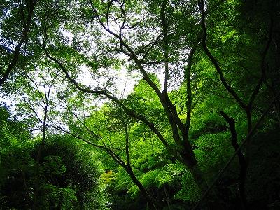 奥嵯峨の緑