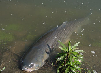 今日の最大魚・・草ちゃんです!!。