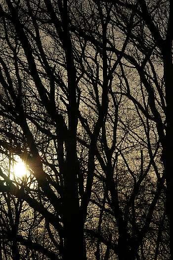 木立の中の夕陽