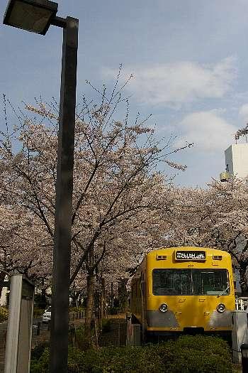 でんしゃとしょかんと桜