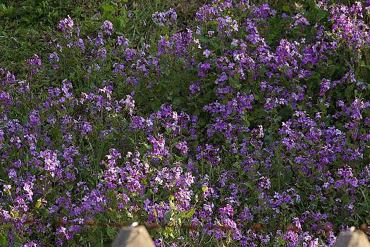 土手に咲く花