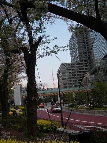東京ミツドタウンの桜5