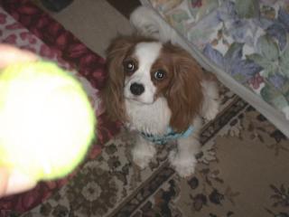 ボール取れるかな?