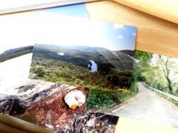 サキシマ採集写真