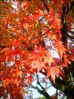 入鹿池の紅葉