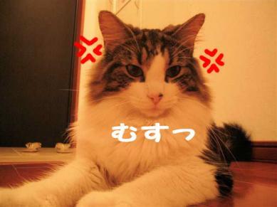 P1070879_R.jpg