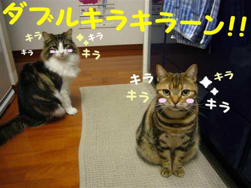 P1080893_R.jpg