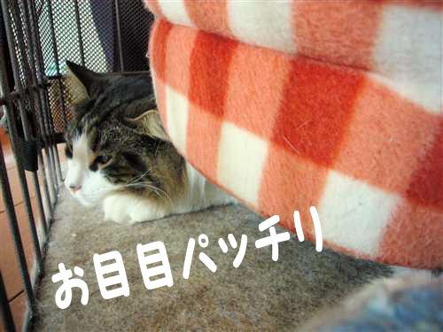 P1090070_R.jpg