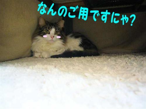 P1090081_R.jpg