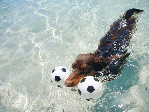 ゴエモンの夏泳ぎ