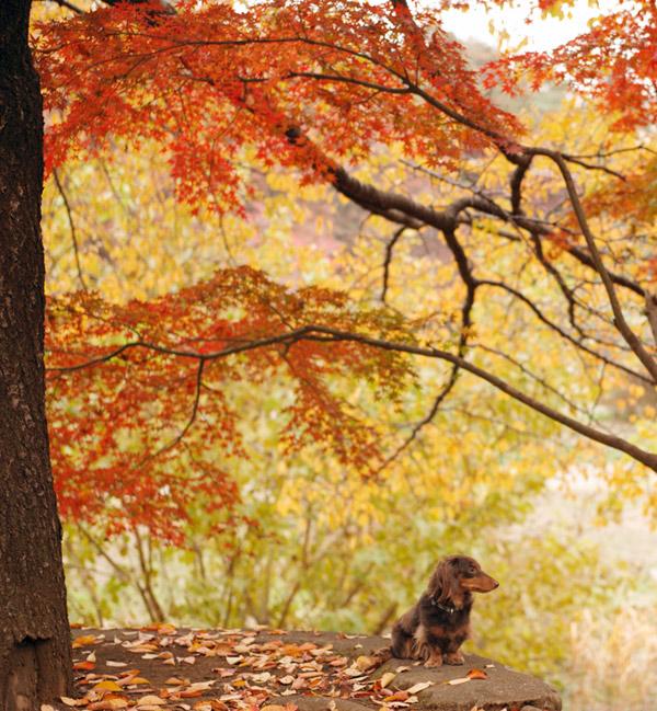 秋のゴエ3