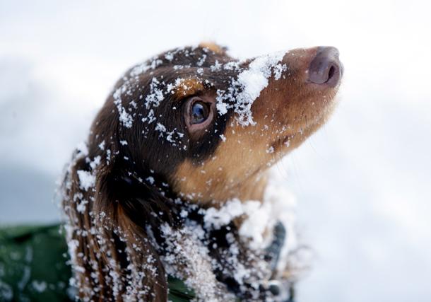 雪のまなざし