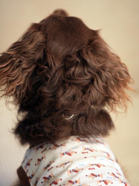 ゴエのくり髪