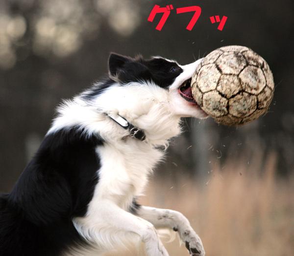 サッカージュウ3