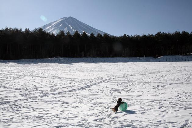 富士とゴエモン
