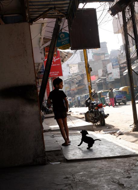 インドの犬6