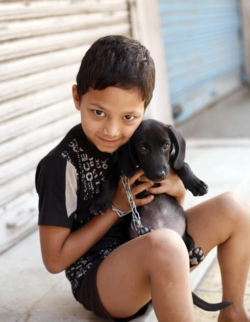 インドの犬4