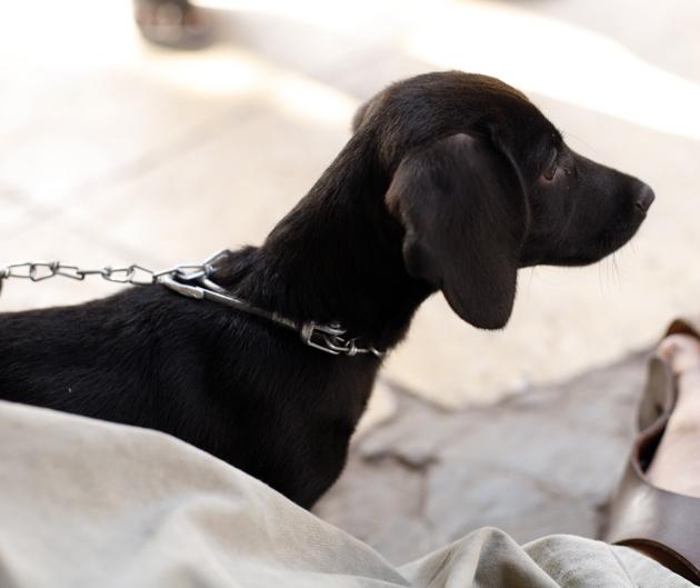 インドの犬5