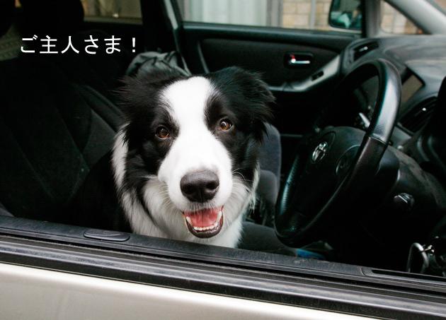ジュウの運転手