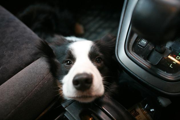車内で見つめるジュウ