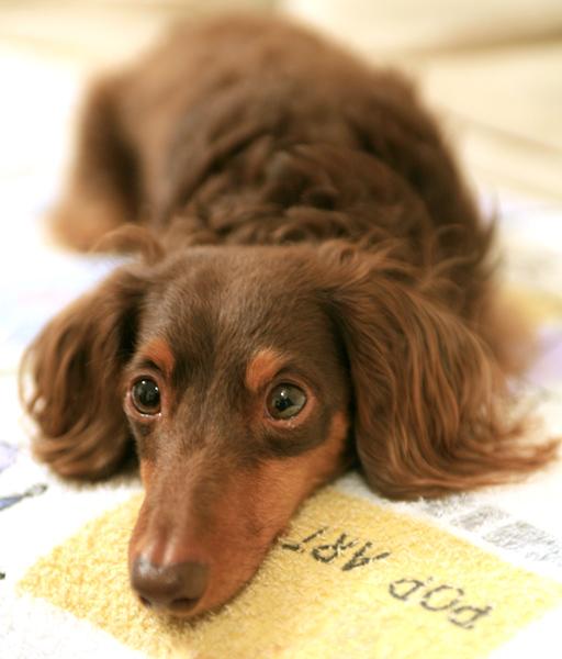 dogphoto3.jpg