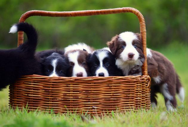 puppy-photo.jpg