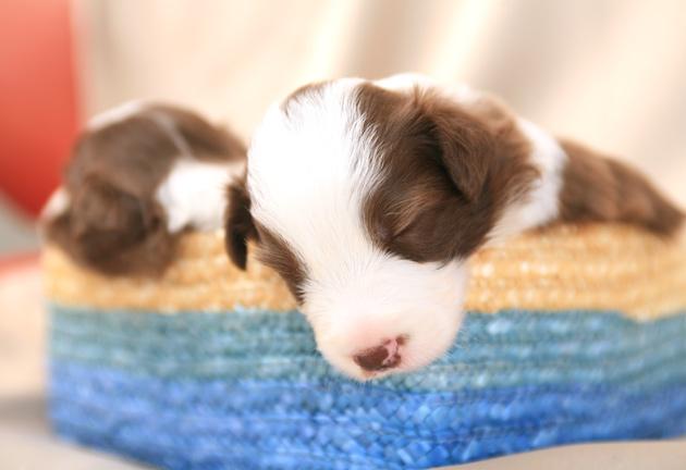 puppy3_20090714100433.jpg