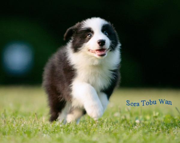 puppy5.jpg