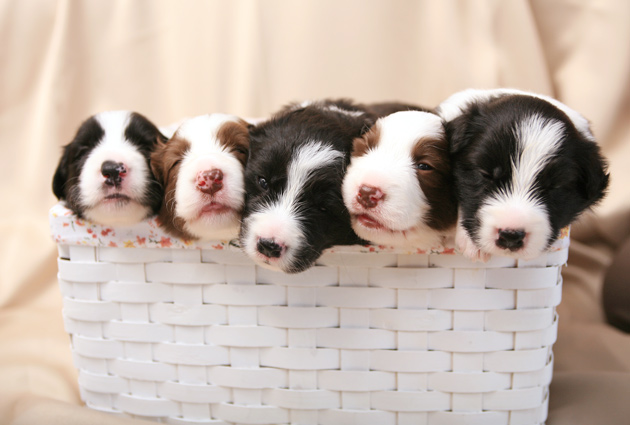 puppy51.jpg