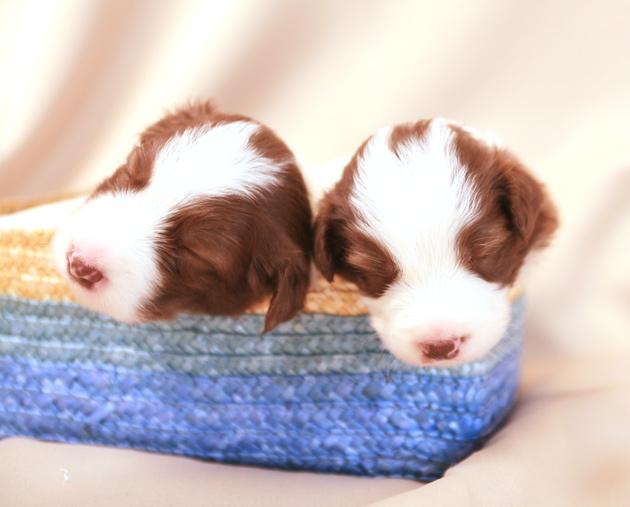 puppy7.jpg