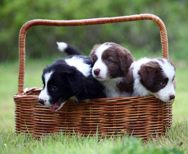 puppyc.jpg