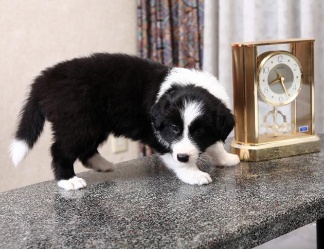 puppyclock2.jpg