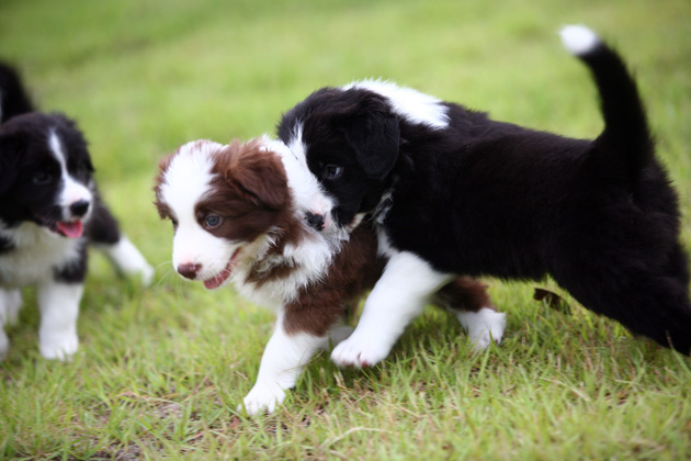 puppyd.jpg