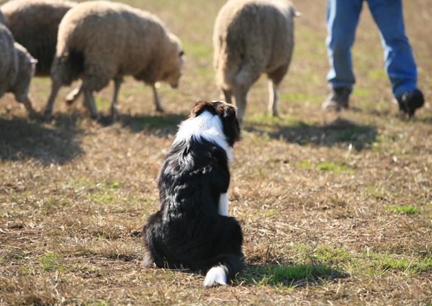 sheep2_20090715232703.jpg