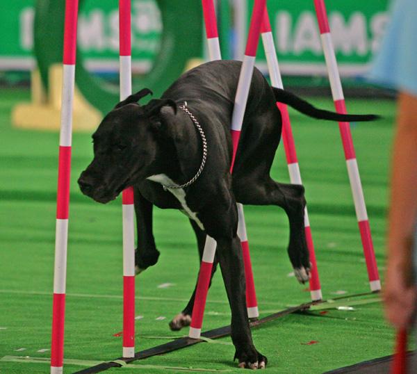 superdog3.jpg