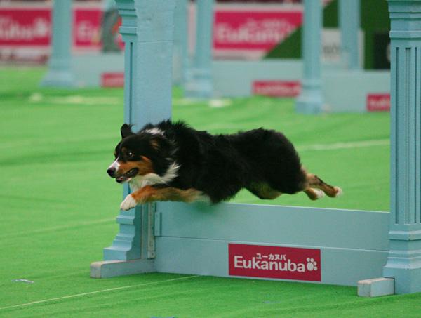 superdog4.jpg