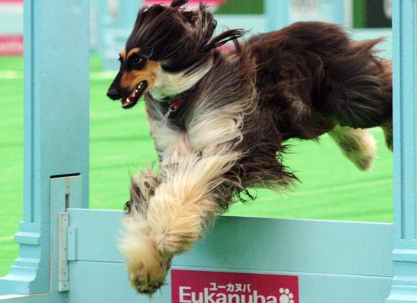 superdog5.jpg
