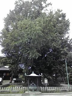 2008_0906_105934-F1000045.jpg