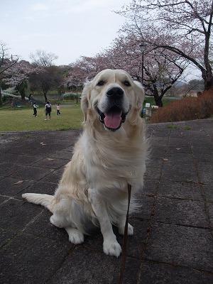 2009_0404_散歩0003