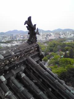 syachihoko