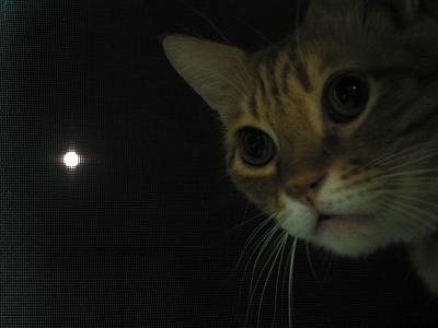 Kotetsu&moon