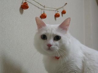Jill Halloween