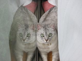 Mint twins