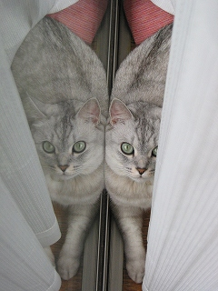 Mint twins 2