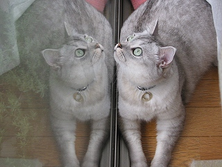 Mint twins 3